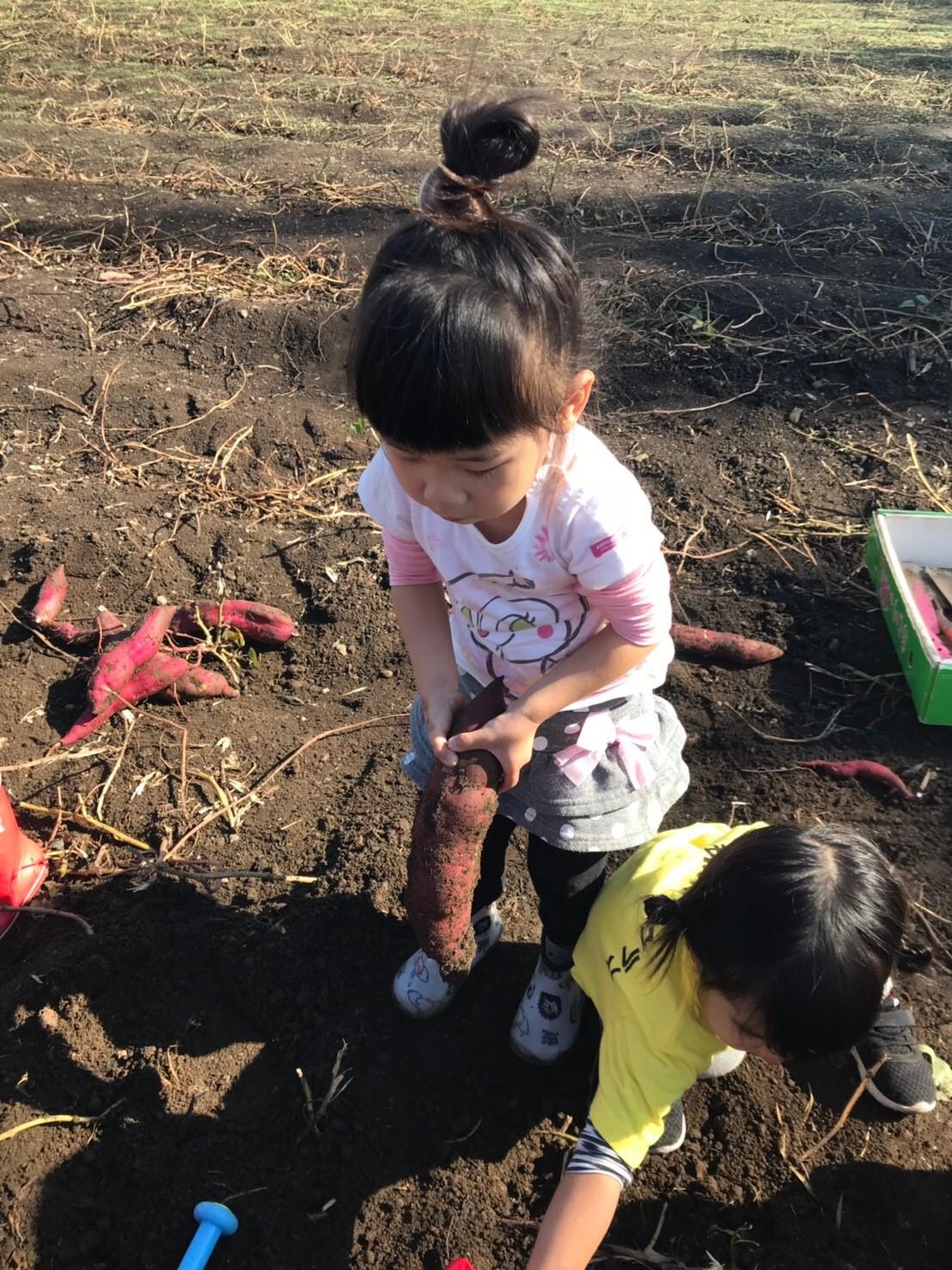 お芋掘り3期生画像5