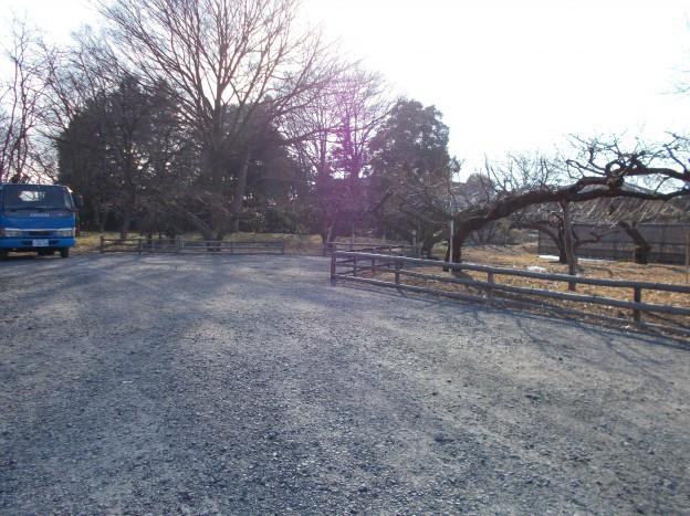 果樹畑と駐車場 境界垣根の改修工事施工前