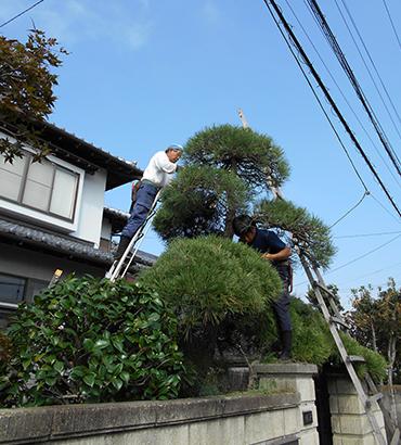 庭園管理(お庭の手入れ)