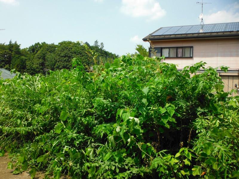 伊勢原市で草刈り作業を実施画像2