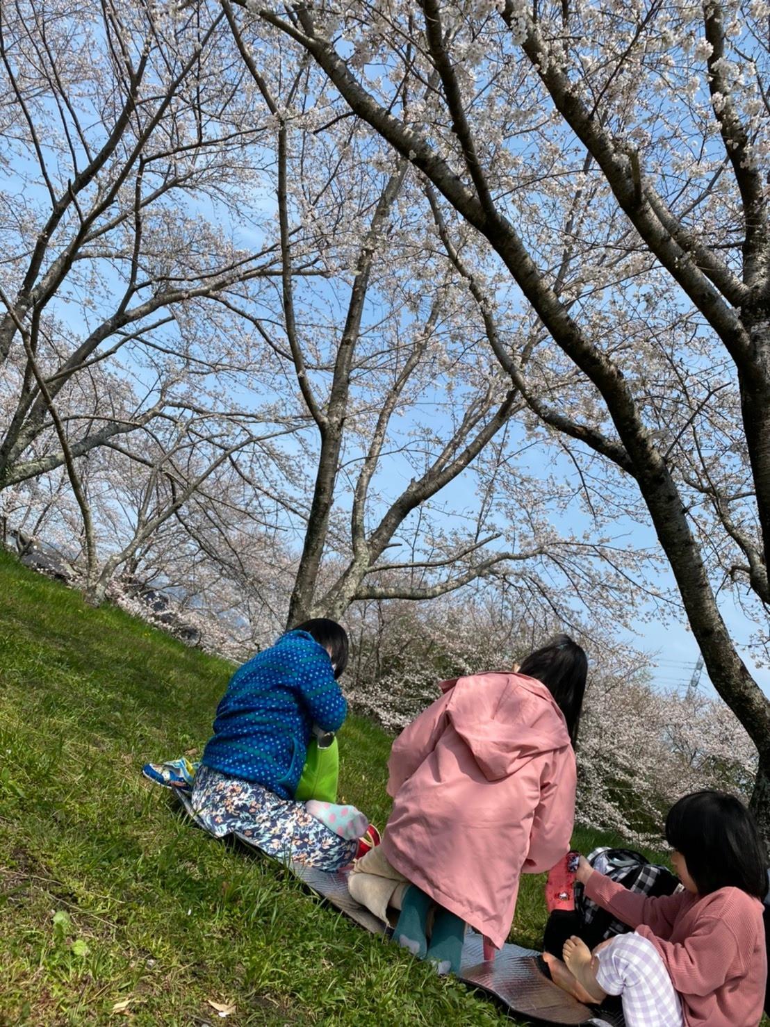 さくらサクラ桜画像
