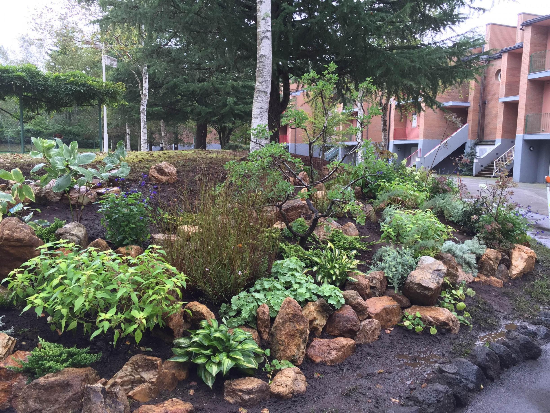 秋に施工したロックガーデン!寒い河口湖の冬を乗り切って花を咲かせる植物たちを見るのを楽しみにしてます!