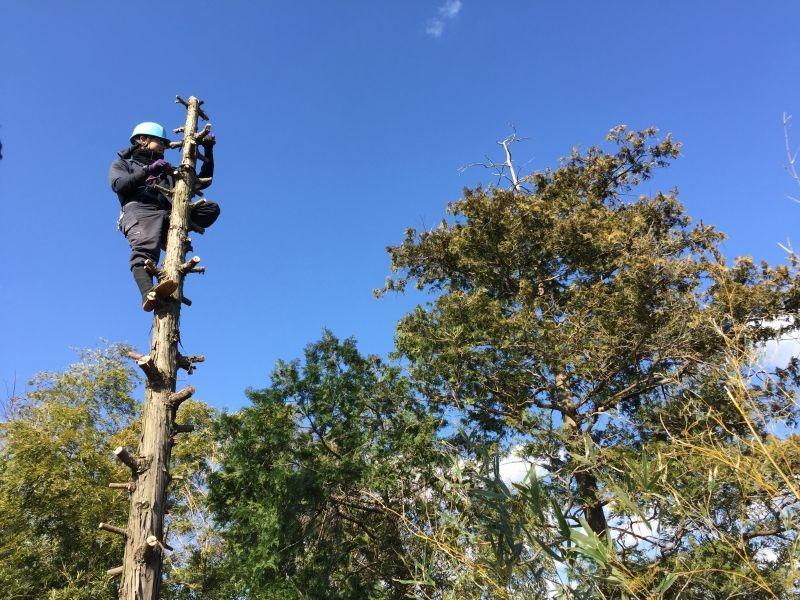 特殊作業   大きくなり過ぎた樹木がお隣の敷地に枝を伸ばしてしまった。枝を切りたいけどハシゴが届かない。高所作業車やクレーン車が入れない。そんな樹木でも、そんな場所でも安全に登れます。枝も落とさず降ろせます。大きな車両や大がかりな足場も作りません。