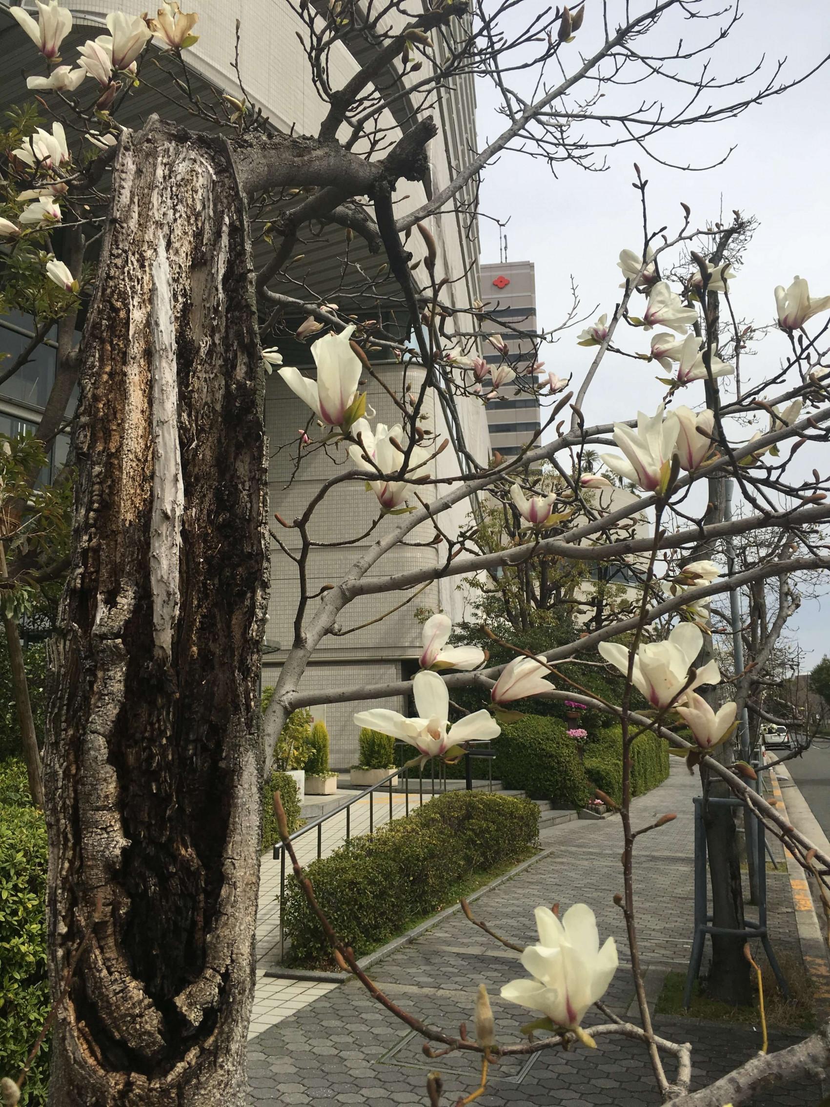 春   3