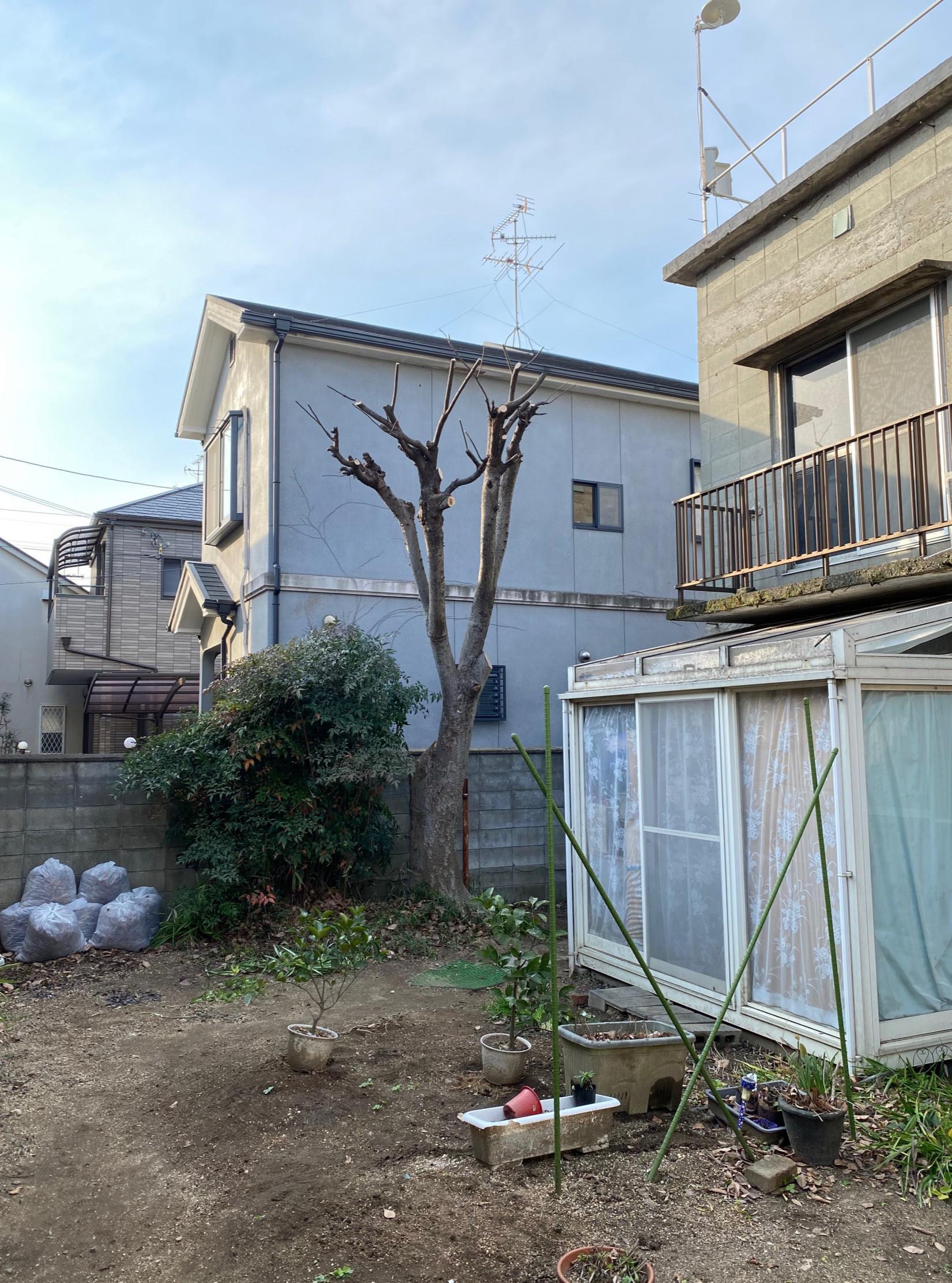 枚方市 O様邸 高木ケヤキ一部伐採 強剪定の施工イメージ画像01