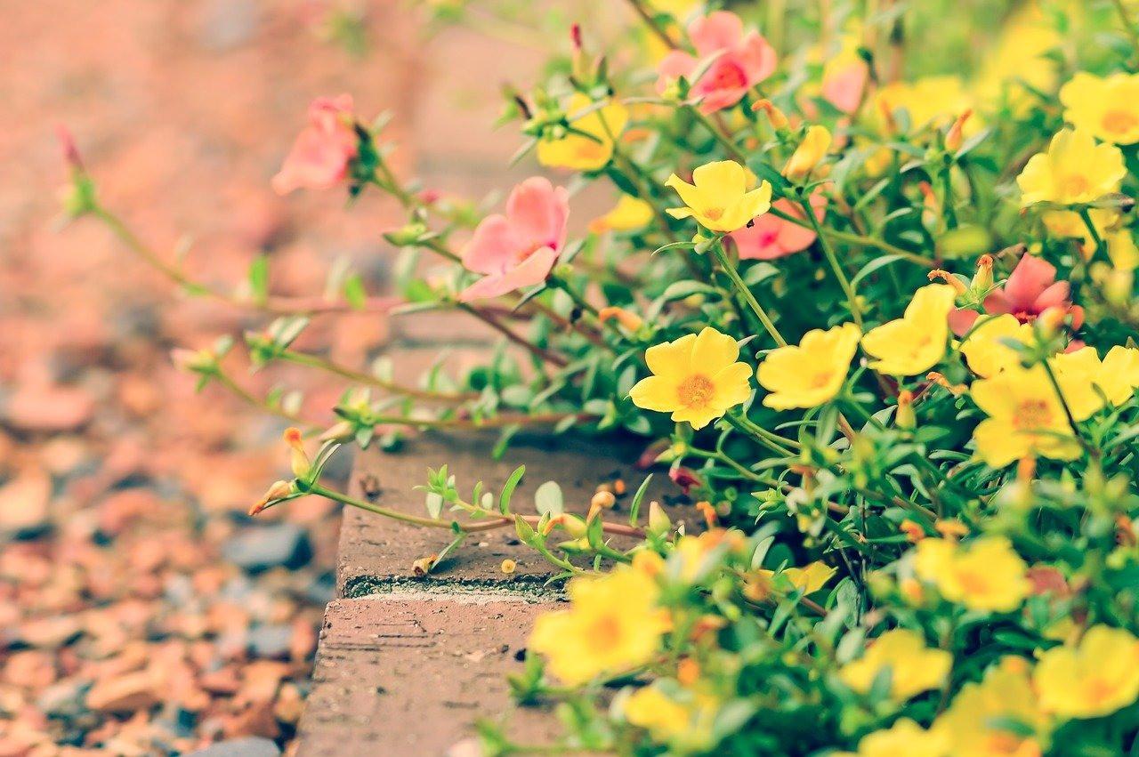 X様邸・花壇植栽施工の施工イメージ画像03