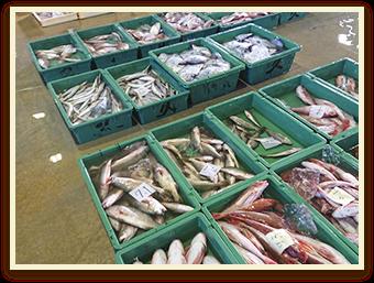 漁師が食べるプリップリな魚が食べられる!