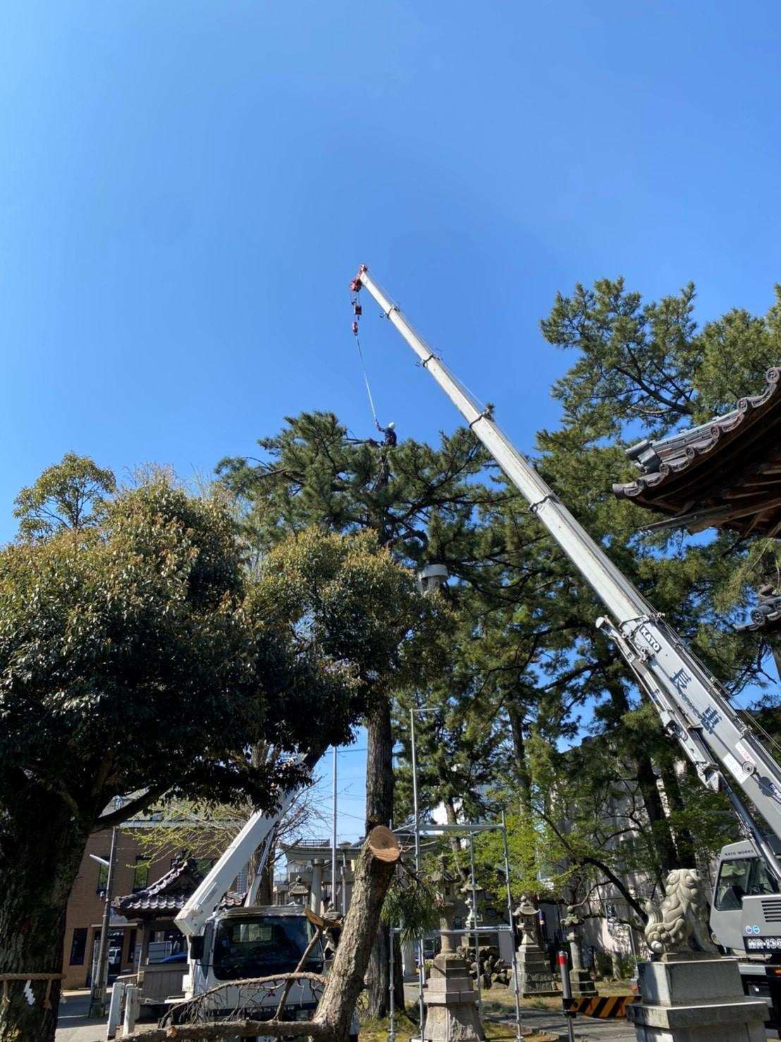 木登り伐採
