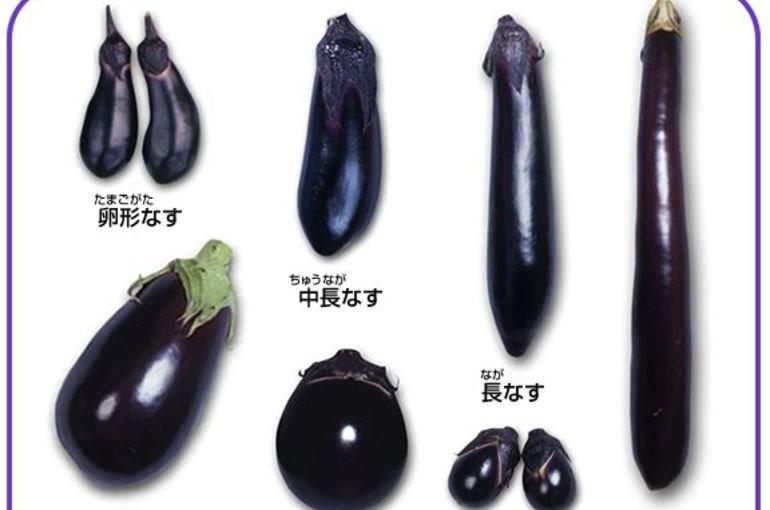 これからの季節の野菜を紹介します!