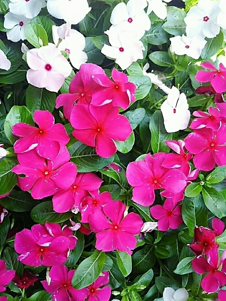 夏のWelcome flowers