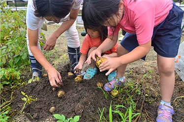 夏野菜の収穫体験始まります