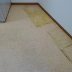 床面の剥離洗浄画像