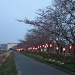 武庫川さくらと灯りのプロムナード画像