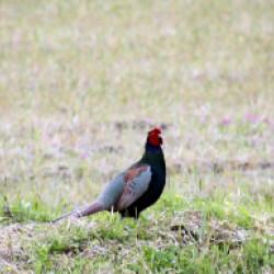 三田市の鳥画像