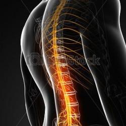 背骨は神経の通り道