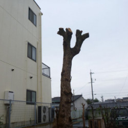 奈良市 伐採工事画像