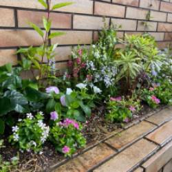 夏花壇施工画像
