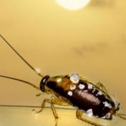 ゴキブリでどんな被害に遭うのか、ゴキブリの駆除方法とは