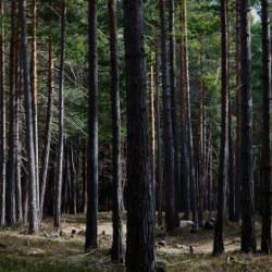 山林買取はごく普通に行われているのをご存知でしょうか。