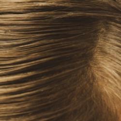 髪の毛の構造や組織について